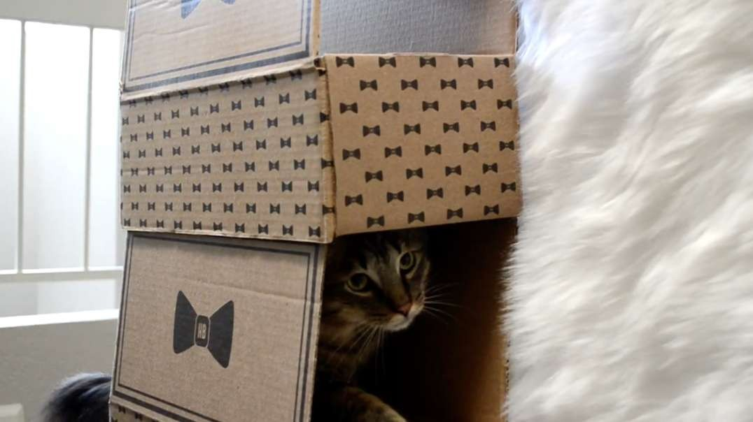 DIY Cat Tree Made From Your Old Hippie Butler Boxes